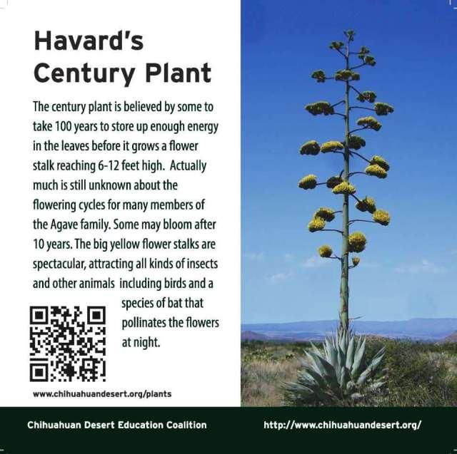 ClevelendSq_signs_Century Plant