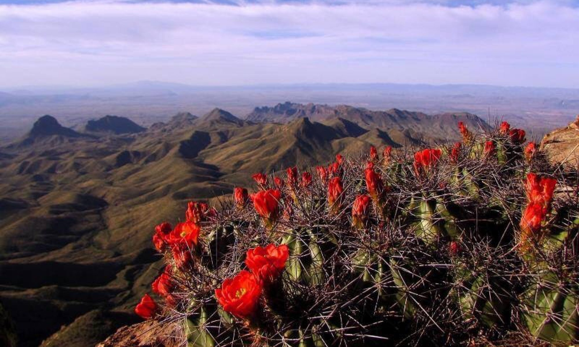 Chihuahuan Desert Education Coalition
