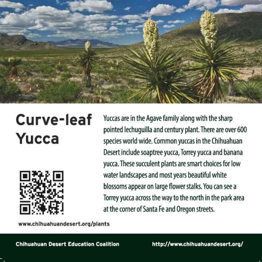 ClevelendSq_signs_Torrey Yucca